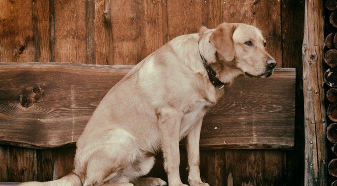 Kutyavilág – Mester Györgyi újabb novellája