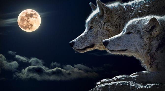 Takács Hajnal (Ad Librum Kiadó): Farkasokkal futni
